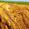 ENZYMIX Zemědělství